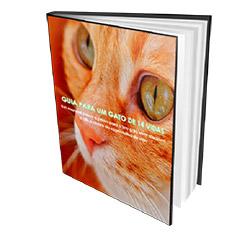Guia Para um Gato de 14 Vidas - eBook