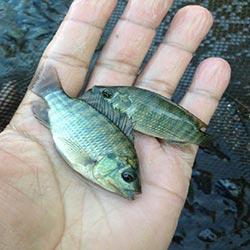 Curso Como Ganhar Dinheiro Criando Peixes