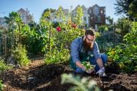 Jardinagem Orgânica para Todos