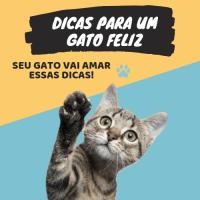 Dicas Para Um Gato Feliz